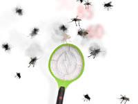 Insecto-smash