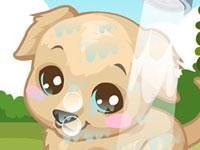 Labrador Care
